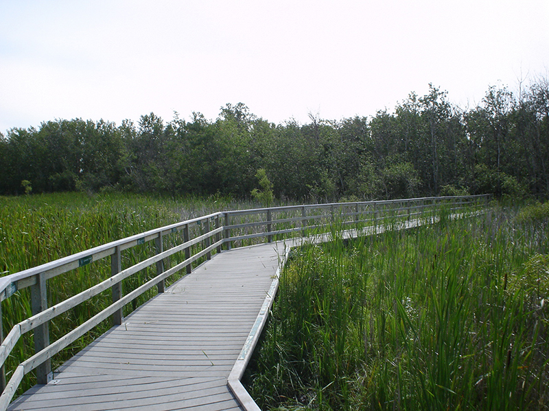 Assiniboine Forest